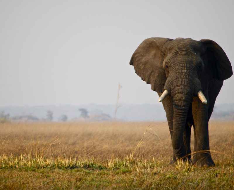 Zambia_Kafue_Icon_Jeffrey_McKeith